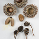 Aicorns and pinecones. - PhotoDune Item for Sale