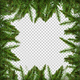 Pine Branches Christmas Frame - VideoHive Item for Sale