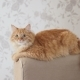 Cute Ginger Cat Lying on Arm of Sofa - VideoHive Item for Sale