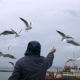 People on the Ferry Feed the Gulls Hovering in the Air - VideoHive Item for Sale