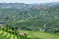 Green vineyards and green Langhe hills in Piedmont, Italy - PhotoDune Item for Sale
