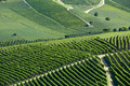 Vineyards green background in a sunny day on hills - PhotoDune Item for Sale