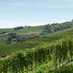 Green vineyards and hills in a sunny day, blue sky - PhotoDune Item for Sale