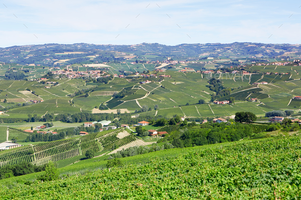 Piedmont hills with vineyards in a sunny day in Italy - Stock Photo - Images