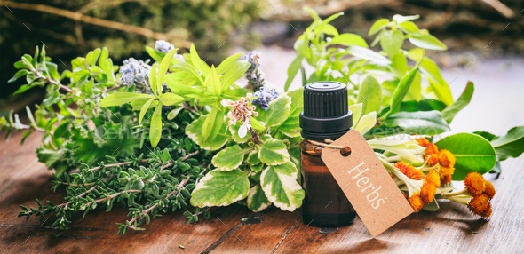 Variety of herbs and oil on wooden background - Stock Photo - Images