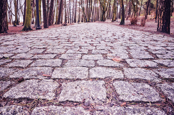 Cobblestone path in a park. - Stock Photo - Images