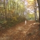 The Girl Is Running Through the Forest - VideoHive Item for Sale