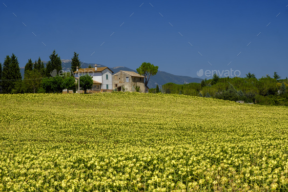 Typical farm in Umbria (Italy) at summer - Stock Photo - Images