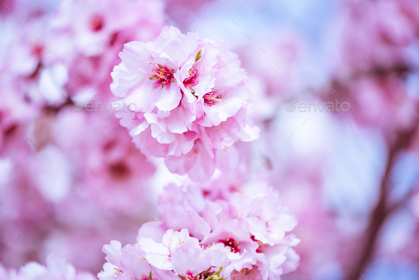 Spring blossom orchard. Abstract blurred background. - Stock Photo - Images