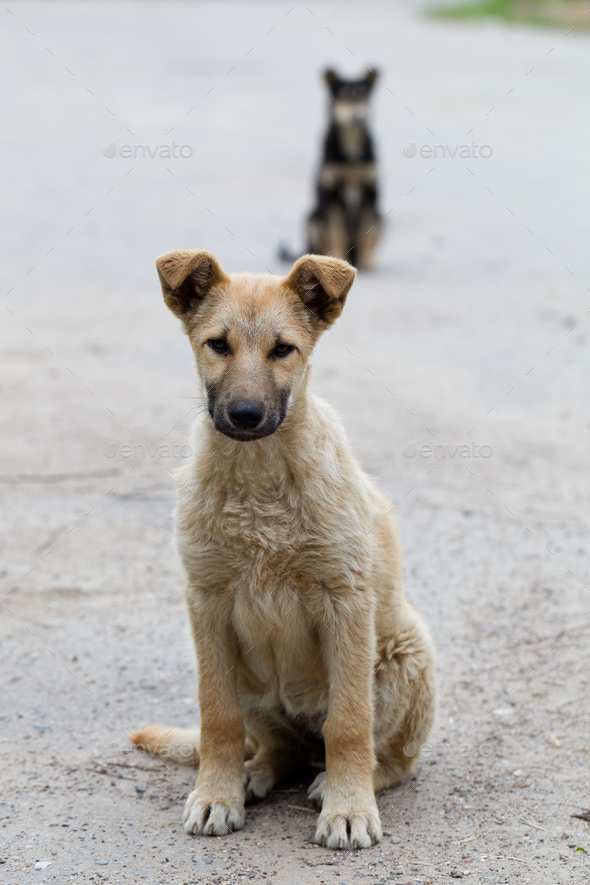 Small puppies of stray dogs - Stock Photo - Images