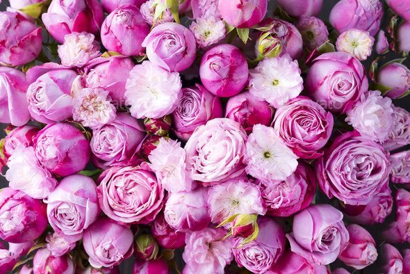 background of pink Roses - Stock Photo - Images