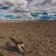 Skull of a Dead Animal in the Gobi Desert. Mongolia - VideoHive Item for Sale