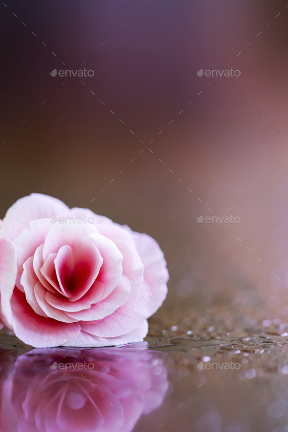 Pink Valentine's day vertical background - Stock Photo - Images