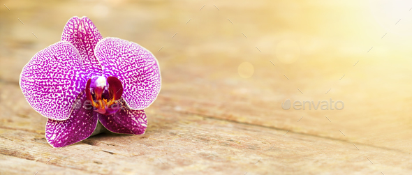 Orchid purple flower - Stock Photo - Images