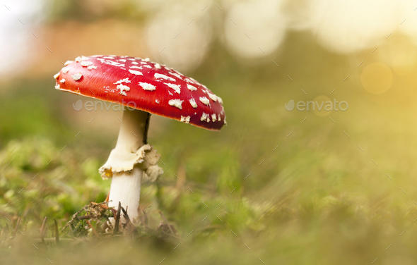 Poisonous mushroom - Stock Photo - Images