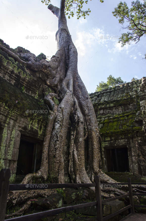 Ta Prohm - Stock Photo - Images