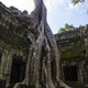 Ta Prohm - PhotoDune Item for Sale