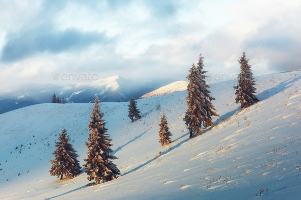 Dramatic wintry scene with snowy trees. - Stock Photo - Images