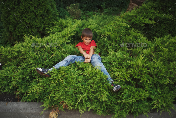 little boy lying on juniper - Stock Photo - Images
