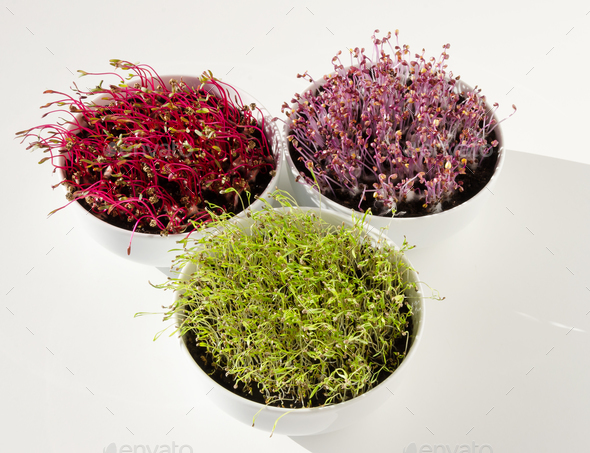 Beetroot, red cabbage, carrot microgreens in bowls from above - Stock Photo - Images