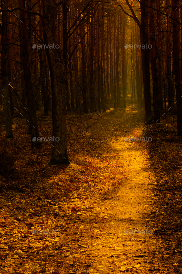 Forest path in the warm autumn light - Stock Photo - Images