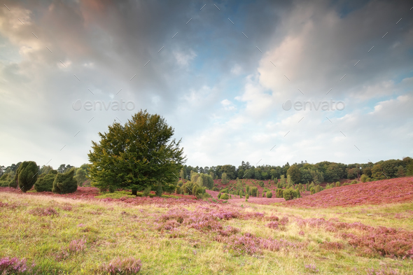 beautiful sky over hills with beech and heather - Stock Photo - Images