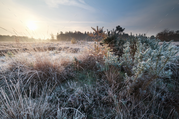 autumn sunrise over frosted meadow - Stock Photo - Images