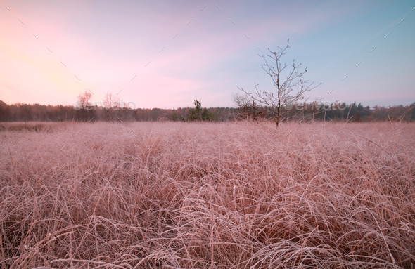 frosty autumn sunrise - Stock Photo - Images