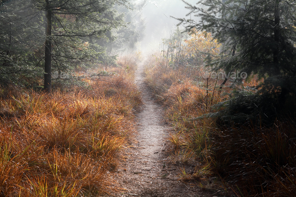path in misty autumn forest - Stock Photo - Images