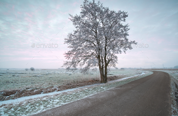 countryside road at frosty morning - Stock Photo - Images