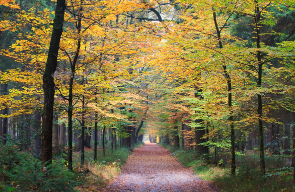 walking path in autumn forest - Stock Photo - Images