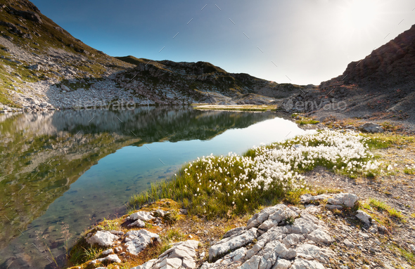 cotton-grass on Laufbichelsee lake in rocks - Stock Photo - Images