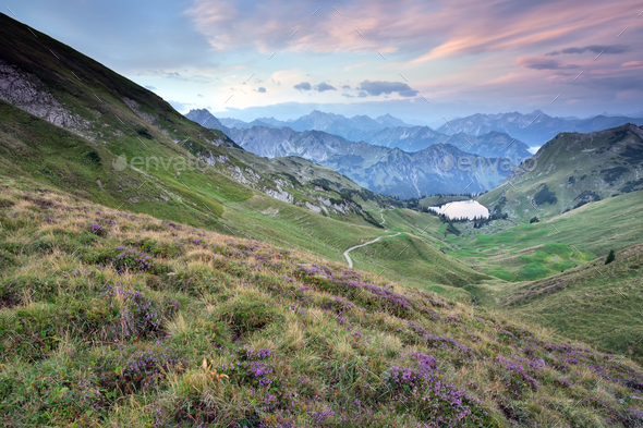 flowering heather on mountains by lake - Stock Photo - Images