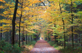 walking path in autumn forest - PhotoDune Item for Sale