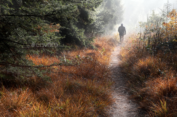 man walks on forest path in fog - Stock Photo - Images