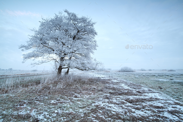 frosty morning on countryside - Stock Photo - Images