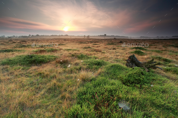 calm sunrise over summer meadow - Stock Photo - Images