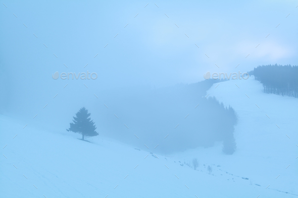 spruce tree in snowy foggy mountains - Stock Photo - Images