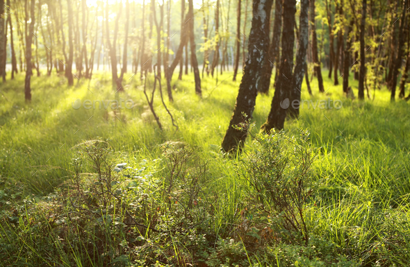 sunlight in green forest - Stock Photo - Images