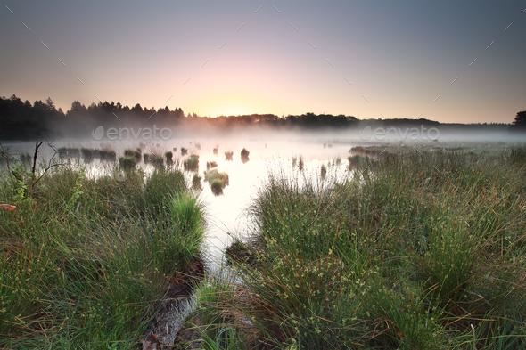 calm sunrise on misty moor - Stock Photo - Images