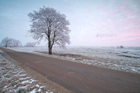 countryside road and frosted tree at sunrise - Stock Photo - Images