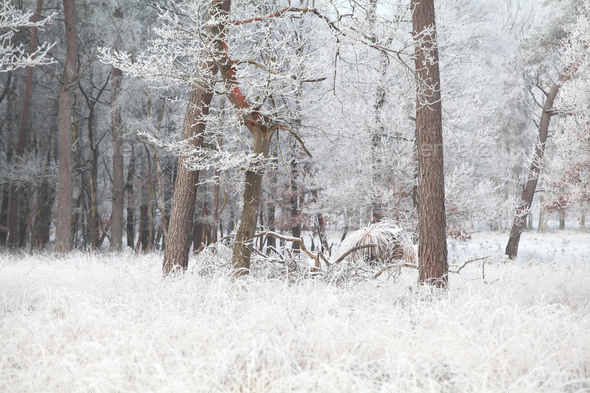 trees in forest in frost during fall - Stock Photo - Images