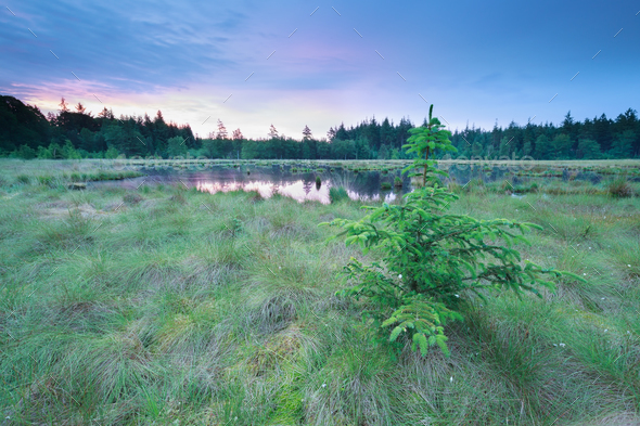sunrise on wild forest lake - Stock Photo - Images