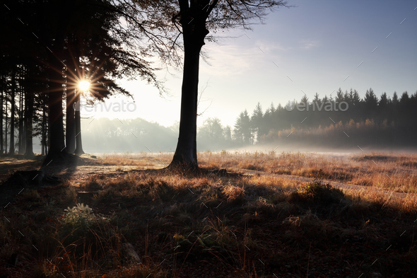 serene misty sunrise in forest - Stock Photo - Images