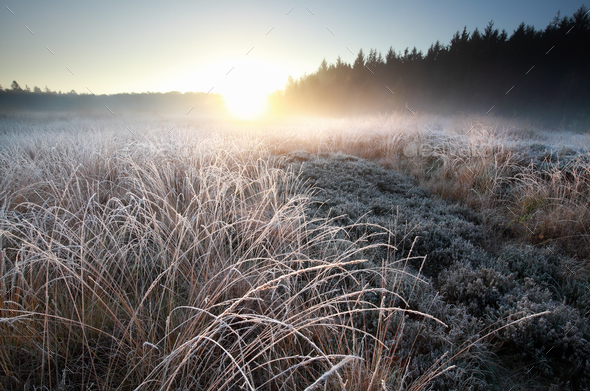 misty winter sunrise over frosted meadow - Stock Photo - Images