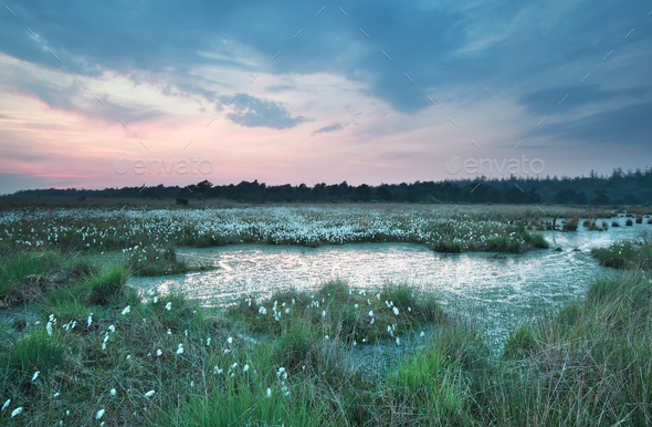 dawn on spring swamp - Stock Photo - Images