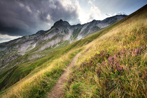heather flowers by trekking path in mountains - Stock Photo - Images