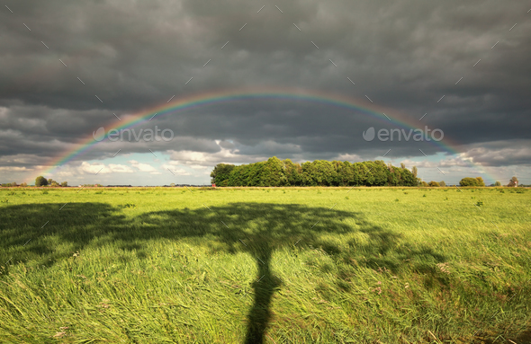 rainbow and tree shadow - Stock Photo - Images