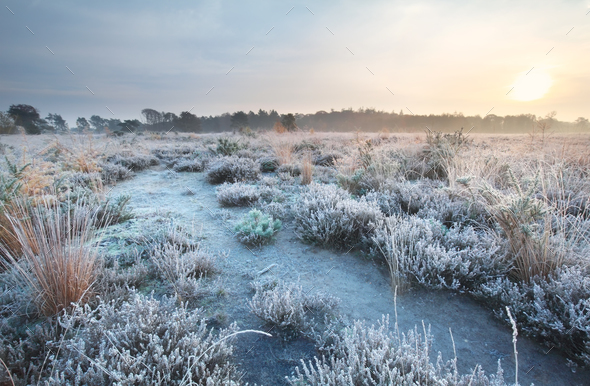 frosted path at sunrise - Stock Photo - Images