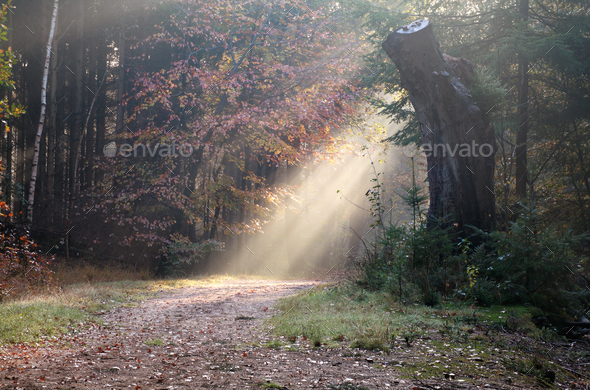 sunbeam over path in autumn forest - Stock Photo - Images